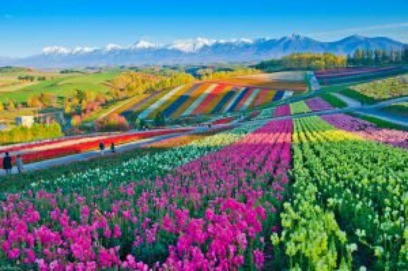 Tips & Rekomendasi Berlibur Awal Musim Panas Di Jepang