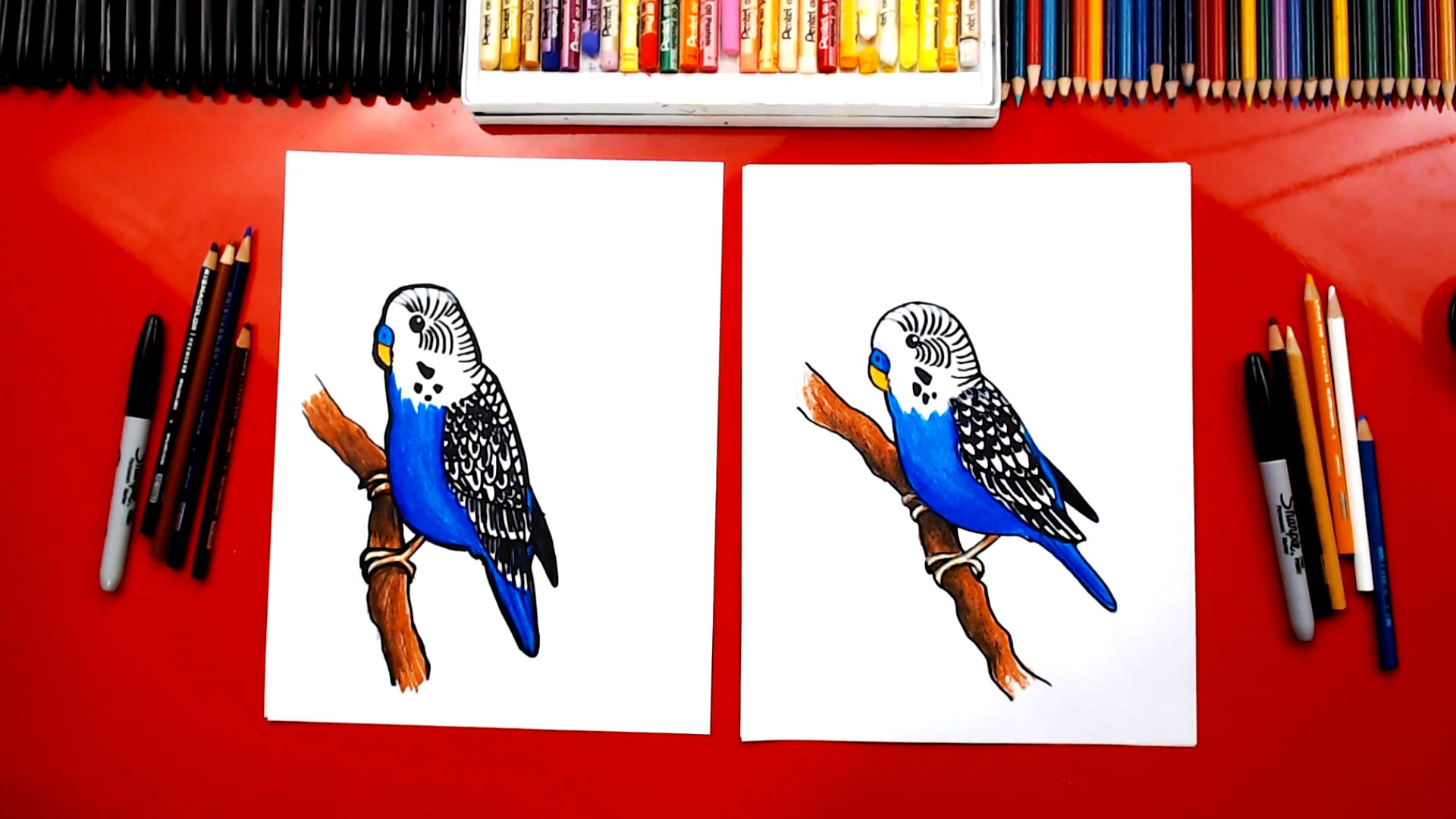 How To Draw A Budgie Parakeet Art For Kids Hub