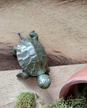 bronze turtle top view