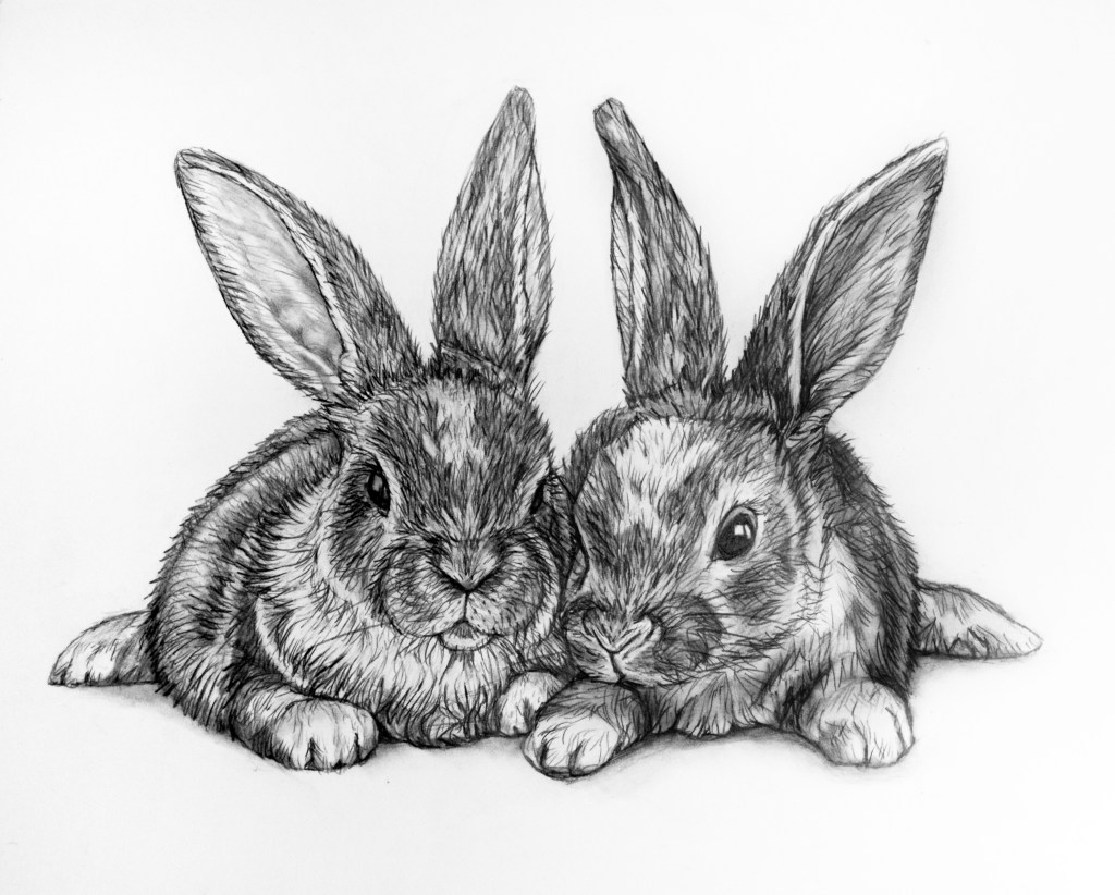 bunny rabbit pencil drawing