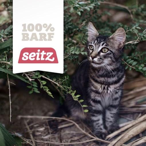seitz barf barf ern hrungstipps f r katzen artgerechtes. Black Bedroom Furniture Sets. Home Design Ideas