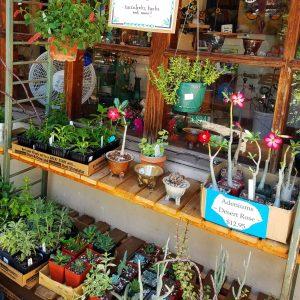 tucson flower pots for sale