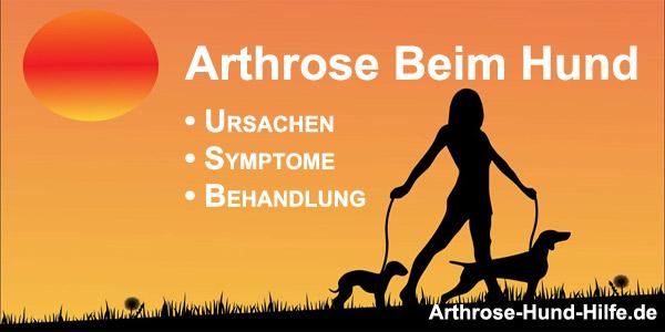 Arthrose beim Hund - Ursachen, Symptome, Behandlung