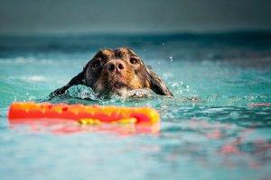 Arthrose-Hund-und-Bewegung---Schwimmen