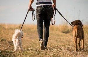 Arthrose Hund Bewegung Spazieren gehen