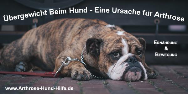Übergewicht Beim Hund - Eine Ursache Für Arthrose Beim Hund