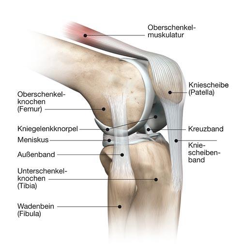 Anatomie | adi13th\'s Blog