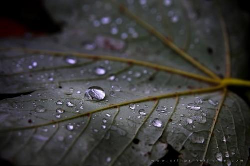 dark dew