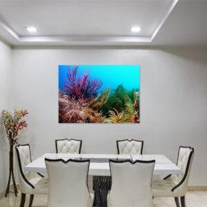 Cuadro coral y algas