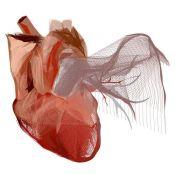 """""""Corazón"""". Paula Heredero. Estampación digital sobre papel alta calidad. Edición limitada 75 unidades. Firmada y numerada."""