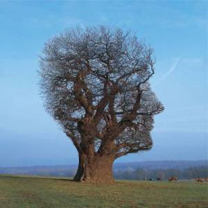 (Pink Floyd – Tree of Half Life [Promo Art] )