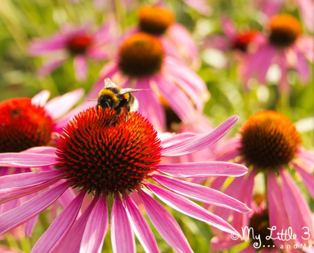 Flowers-and-Bees