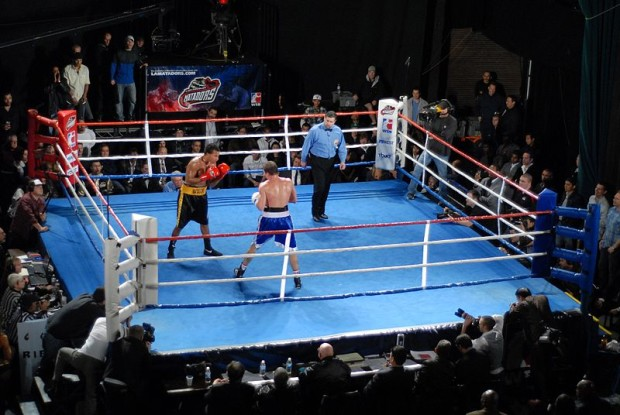 World Series of Boxing
