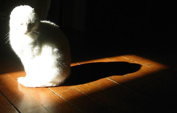 cat dark shadow