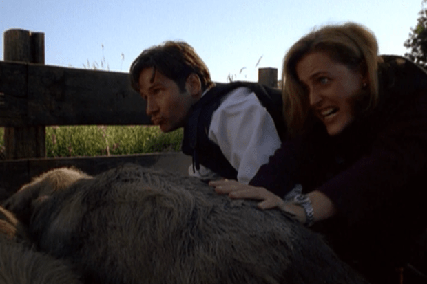 Mulder and Scully and pigs