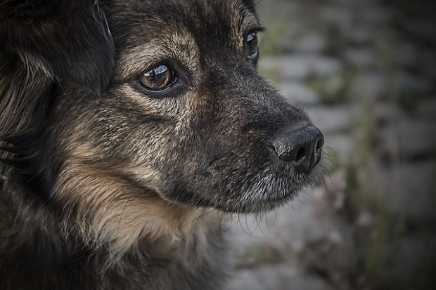 Photo of mutt puppy