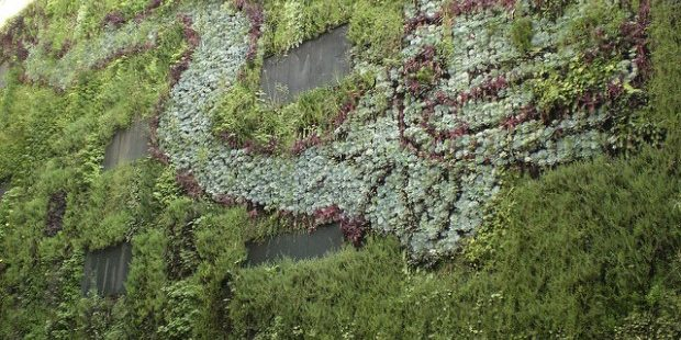 Photo of vertical garden in Mexico City
