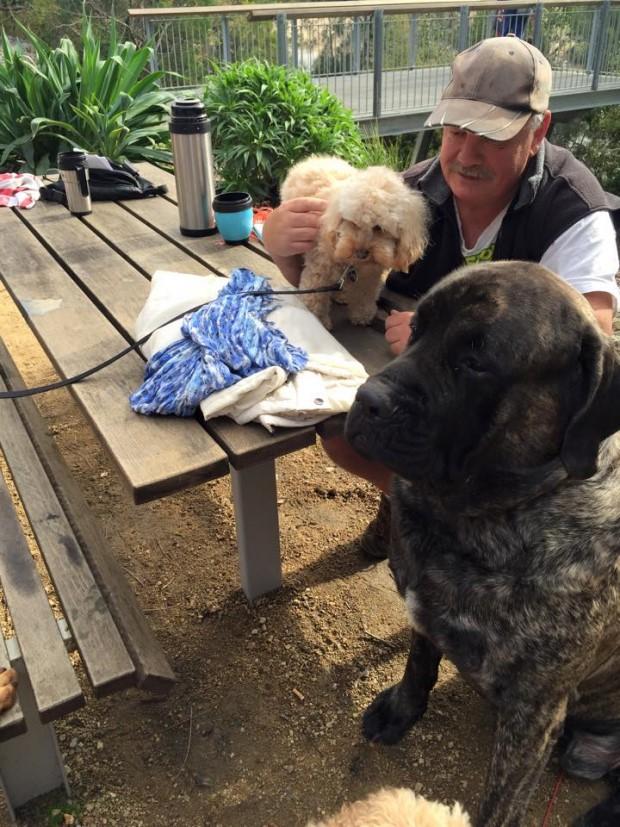 Facebook - Baron the olde English Mastiff