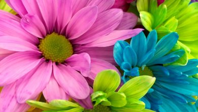 Photo of Top-5 Flower Arrangements that Are Perfect for Your Special One