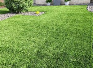 Photo of Tips For Choosing The Premium Quality Artificial Turf Melbourne
