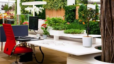 Photo of Indoor Planters Guidelines To Maintain Over The Indoor Plants