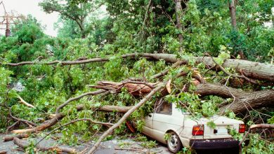 Photo of What If Falling Objects Damage Your Car – Handy Guidelines