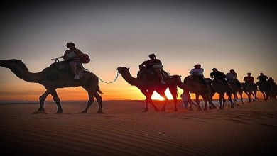 Photo of Camel Ride in Morocco