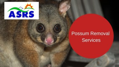 Photo of Possum removal in Sydney