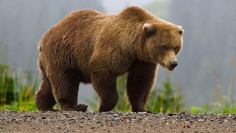 """Bambino sopravvive solo in un bosco a -20°: """"Mi ha aiutato un orso"""""""