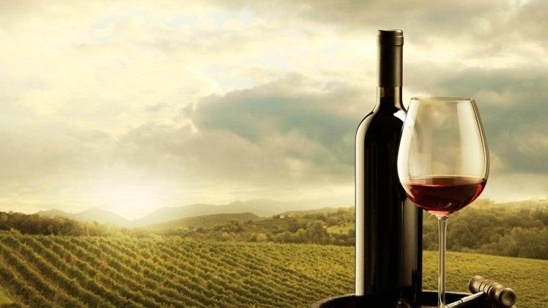 Dalla vendemmia all'invecchiamento: ecco come si fa il vino