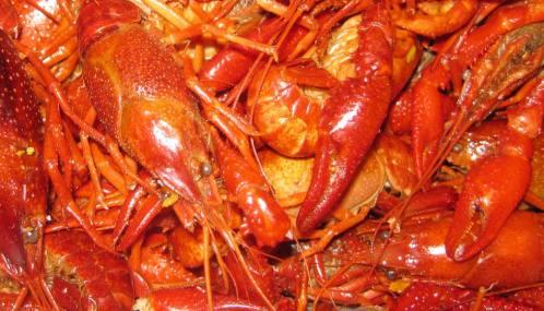 Crawfish Boil :: Denver