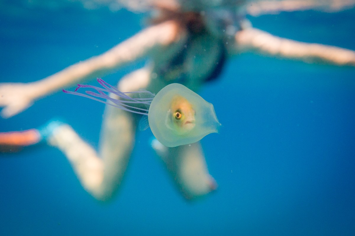 Fish In A Jellyfish