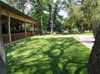 Artificial Grass Carpet Hilltop Lakes, Texas Dog Running ...