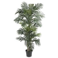 6.5 foot Golden Cane Palm Tree: Potted | 5289