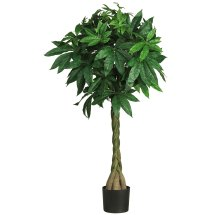 Money Tree Potted 5249