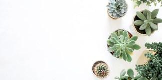 Deze planten zijn aanraders voor gezonde lucht in huis