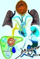 Galen-humorism brain-logic-heart-vital-lungs-liver-nutritive-spleen-stomach-Galen-medicine-history-art-anatomy-Davidoff