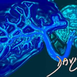 liver-spleen-splenic-vein-portal-vein-connection-art-anatomy-Davidoff