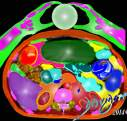 abdomen-hands-organs-liver-kidney-bowel-stomach-crystal-ball-CT-scan-art-anatomy-Davidoff