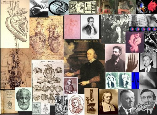heart-history-art-anatomy-Davidoff