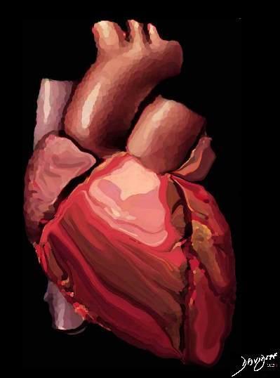 heart, atrial appendage, aorta, pulmonary artery, vena cava, right ventricle, ventricle, left ventricle