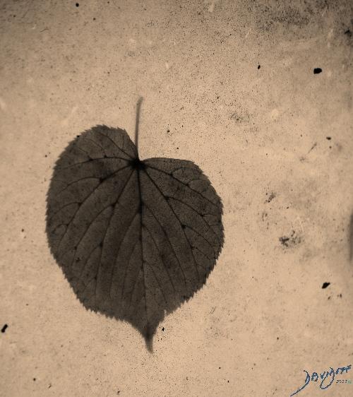 heart0045-catalogue-signed-500-72dpi