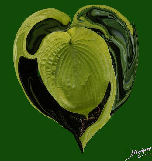 heart0048-catalogue-signed-500-72dpi
