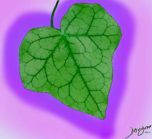 heart, heart shape, ivy, leaf, heart shape, Valentine's day, romance, love,