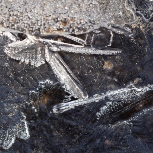 pelican, log fish, winter, ice, cold, crystals, ice crystals, temperature, freezing, shapes, ice crystals, frost, temperature, gravity, science, water