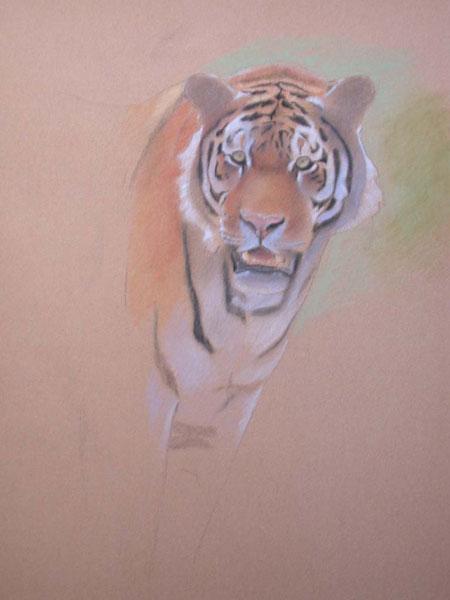 tiger outline