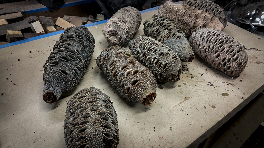 Banksia Pod For Sale