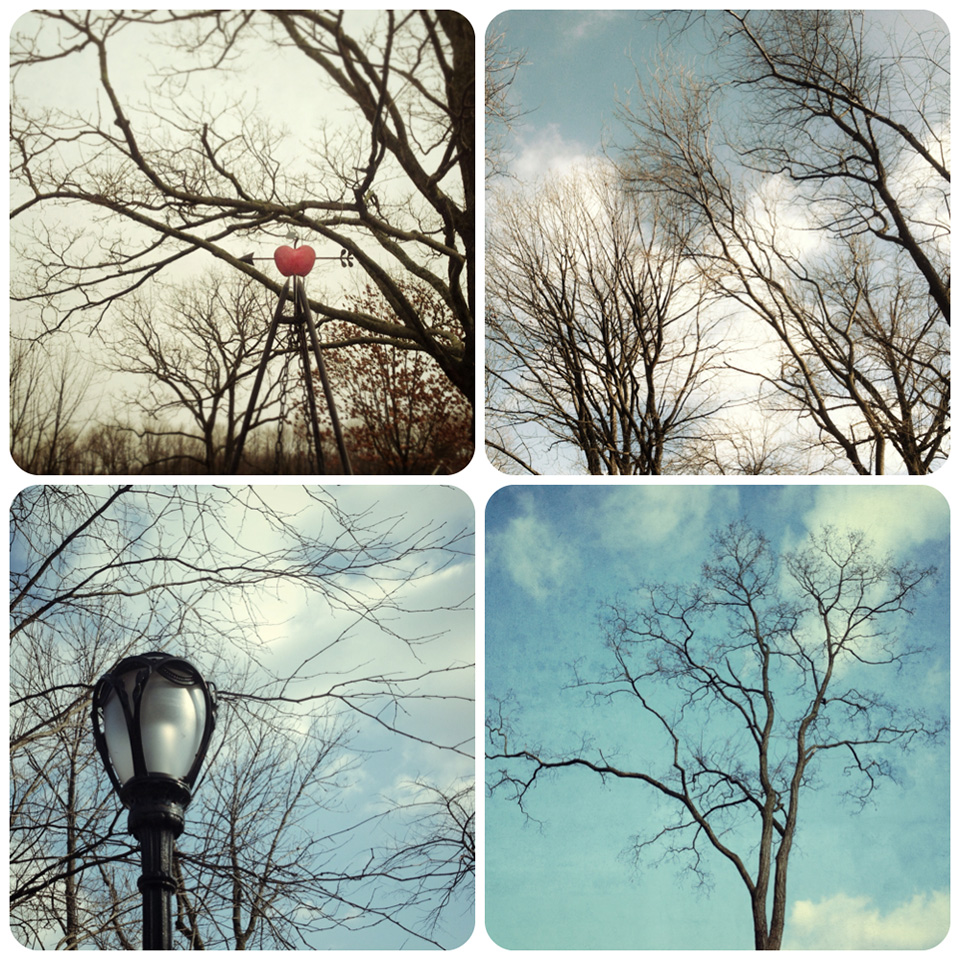 tree collage 3