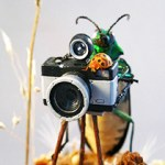 Insect Dioramas by Lisa Wood.