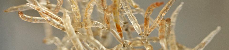 Glass Models of Microscopic Fungi.